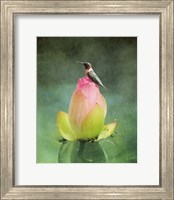 Hummingbird And The Lotus Flower Fine-Art Print