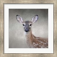 Little Miss Lashes White Tailed Fawn Fine-Art Print