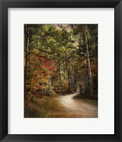 Autumn Forest 2 Fine-Art Print