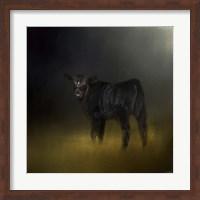 Black Angus Calf In The Moonlight Fine-Art Print