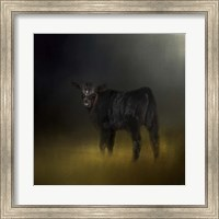 Black Angus Calf In The Moonlight Fine-Art Print