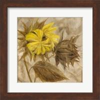 Sunflower IV Fine-Art Print