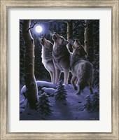 Midnight Clear Fine-Art Print