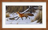Fox Trot  - Red Fox Fine-Art Print
