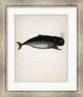 Whale 3 Fine-Art Print
