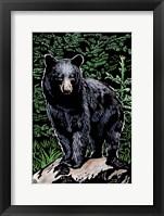 Black Bear 4 Fine-Art Print