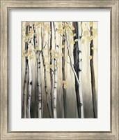 Golden Birch II Fine-Art Print