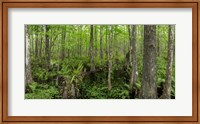 Six Mile Cypress Slough Preserve in Fort Myers, Florida Fine-Art Print