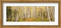 Dixie National Forest, Utah Fine-Art Print