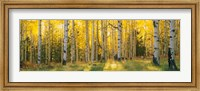 Coconino National Forest, Arizona Fine-Art Print