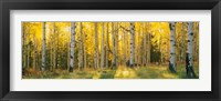 Coconino National Forest, Arizona Fine-Art Print