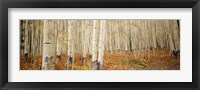 Aspen, Colorado Fine-Art Print