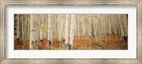 Aspen, Colorado Fine-Art Print
