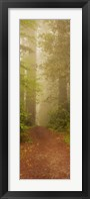 Redwood National Park California Fine-Art Print