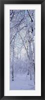 Winter Forest Fine-Art Print