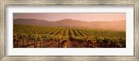 Vineyard in Geyserville, CA Fine-Art Print