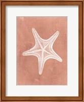 Sealife on Coral IV Fine-Art Print