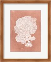 Sealife on Coral VIII Fine-Art Print