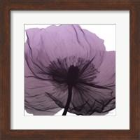 Poppy Purple Fine-Art Print