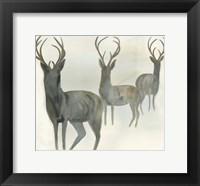 Deer Trio Fine-Art Print