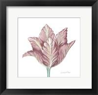 Romantic Tulip 1 Fine-Art Print