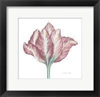Romantic Tulip 2 Fine-Art Print