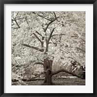 Hamption Magnolia II Fine-Art Print