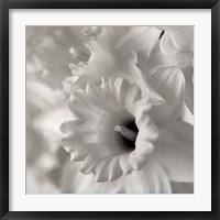 Florison 45 Fine-Art Print