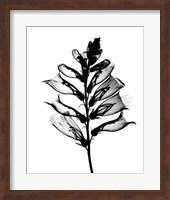 Foxglove #1 X-Ray Fine-Art Print
