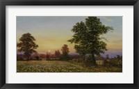 Evening Daisies Fine-Art Print