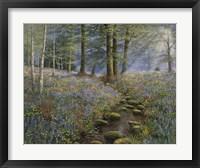 Bluebell Wood Fine-Art Print