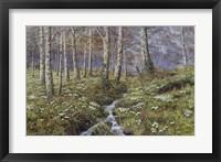 Snowdrop Dell Fine-Art Print