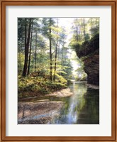 Quiet Forest Fine-Art Print