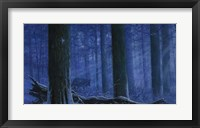 Blue Wolf Fine-Art Print