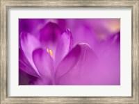 Purple Flower Study Fine-Art Print
