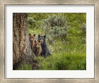 Sow and Cubs Family Fine-Art Print