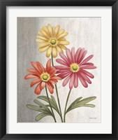 Gerber Daisies Fine-Art Print