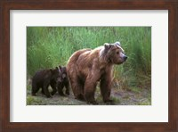 Brown Bear and Cubs Fine-Art Print