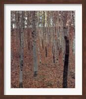 Forest of Beech Trees Fine-Art Print