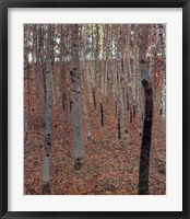 Forest of Beech Trees Fine-Art Print