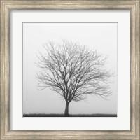 Winter Trio II Fine-Art Print