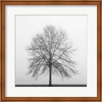 Winter Trio III Fine-Art Print