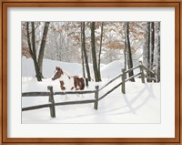Athena in the Snow, Farmington Hills, Michigan 09 Fine-Art Print