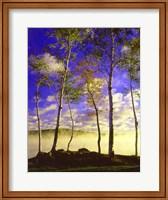 Birch Trees & Mist, Negaunee, Michigan 09 Fine-Art Print