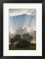 Evening Sunbeams, Sturgis, Michigan 10 Fine-Art Print