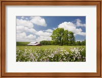 Flowers & Farm, Holmes County, Ohio 10 Fine-Art Print