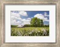 Flowers & Farm, Holmes County, Ohio 10 Fine-Art Print