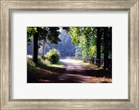 Path Into the Woods, Burgandy, France 99 Fine-Art Print