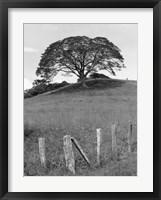 Lone Tree & Fence, Costa Fine-Art Print