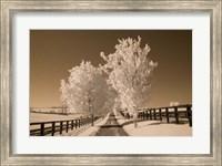 Fence & Trees, Kentucky 08 Fine-Art Print